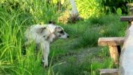 Watchdog video