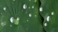 water drop on leaf video
