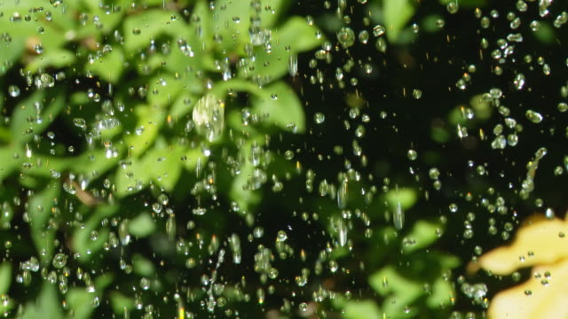 HD: Water Drops Over Colorful Plants video
