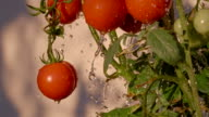 SLO MO Water Drops Splashing Agains Tomatoes video
