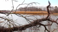 Water flooding swamps at high tide,  high dynamic range imaging video
