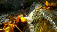 Water flowing and small cascade with leaves in autumn video