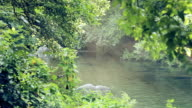 water flowing in the river with a ray of sunlight that strikes green vegetation video