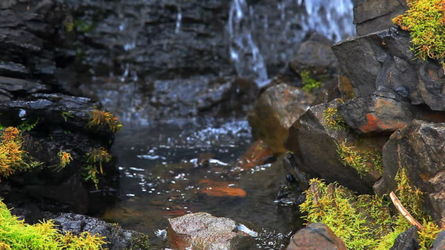 Water flowing over stream bed from waterfalls video