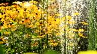 HD DOLLY: Water Fountain In Flower Garden video