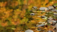 Water in shallow creek reflects fall colors video