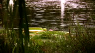 Water Lily video