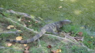 Water monitor video
