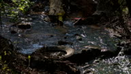 Water pollution in river with trash video