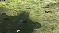 Water Pollution (HD) video