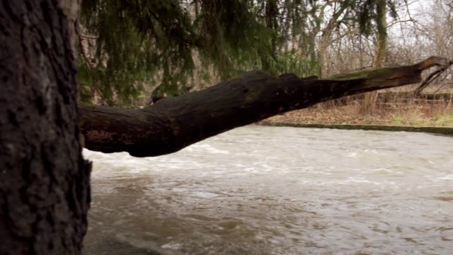 Water rushing around tree roots video