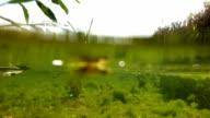 Water snake underwater video