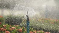 Water sprinkler showering grass video