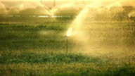 Water Sprinklers at Sunset video