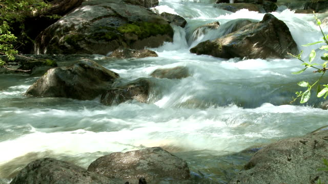 Water stream in a forest video