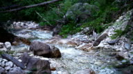 Water stream in Forest video