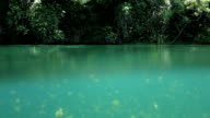 Water surface of Jellyfish Lake, Palau video