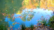 water surface of pond in forest video