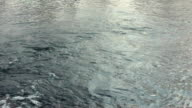 Water surface. River water surface. River flow. Closeup. Flowing water video