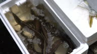 MS Water tank of live eels at fish market video