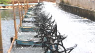 Water turbines on Shrimp ponds. video