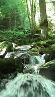 Waterfall in a forest (Vertical video) video