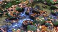 Waterfall in Autumn video