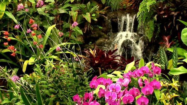 Waterfall in Orchid garden video