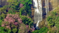 Waterfall in the springtime forest video