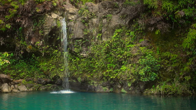 Waterfall in Tropical Paradise (Left) video