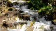 Waterfall nature background rock moss green video