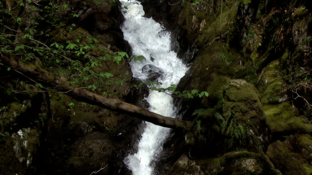 Waterfall on a stream in rural Scottish woodland video