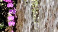 Waterfall orchid video