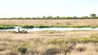 WS ZO Waterhole In The African Savannah video