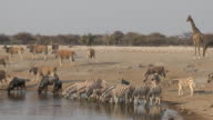 waterhole video