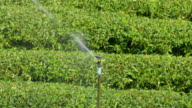 Watering a tree tea morning video