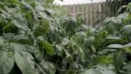 Watering A Vegetable Garden video