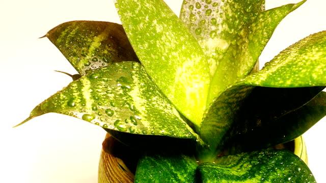 Watering and tending plants video