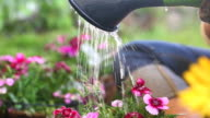Watering Flowers in Hanging Basket video