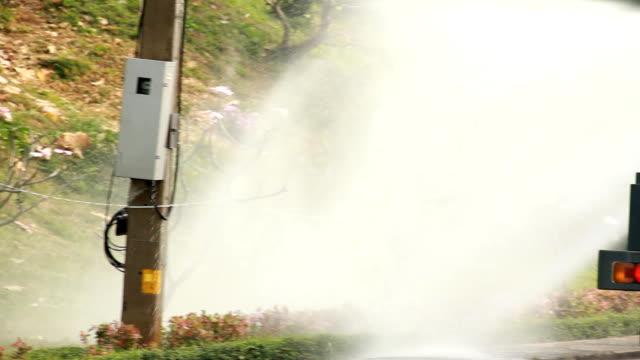Watering flowers. video