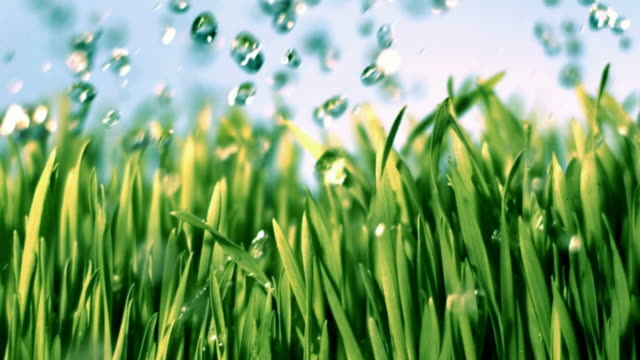 Watering Grass Slow Motion video