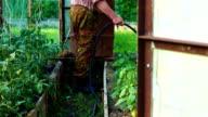 Watering of the seedlings in greenhouse video
