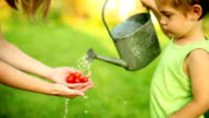watering pot and tomatoes video
