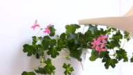 Watering potted plants video