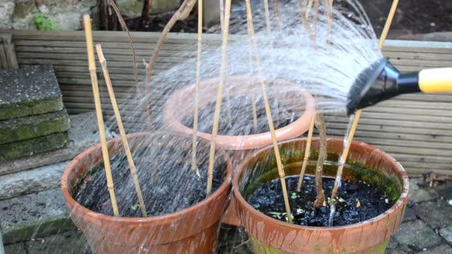 Watering the flowerpots video