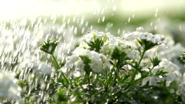 HD SUPER SLOW-MO: Watering The Flowers video