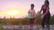 Watering the Plants at Sunset video