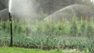 Watering Vegetables video