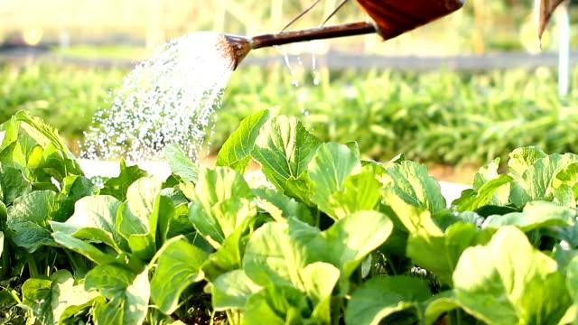 Watering video