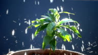 Watering young tree slow motion video
